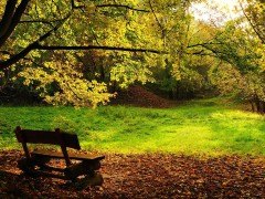 Autumn bench in the park