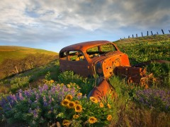 Photo wallpapers - �ar in flowers.