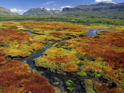 South Africa wallpapers - Colorful Mosses, Cedarberg Wilderness Area, Northern Cape