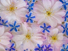 Flower pc wallpapers - Floating violets