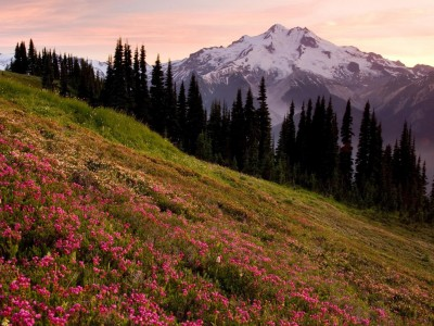 Mountain and Flowers