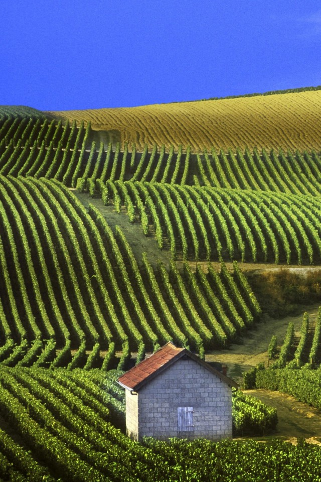 Wallpapers panoramic view of vineyards for Champagne region in france