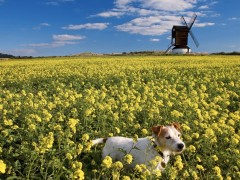 Landscape wallpapers - Pitstone Windmill, Bucks, England