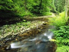 Nature wallpapers - Polenz, Sachsische Schweiz National Park, Germany