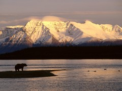 Landscape wallpaper - Brown Bear Silhouetted Against Mount Katolinat, Alaska