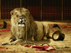 Animal wallpapers - Lion tamer ate