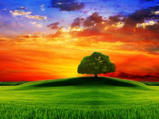 Drawn HD, Tree on the hill at sunset, FullHD wallpapers collcetion, any resolution