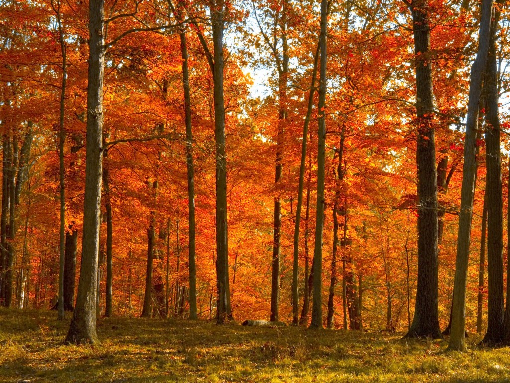 yellow-red autumn forest